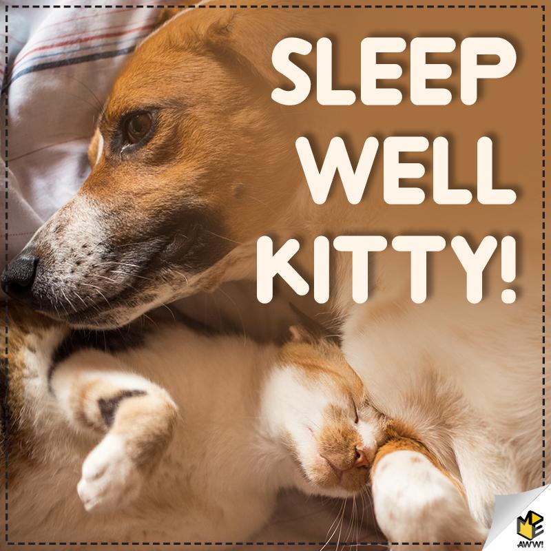 Sleep Well Kitty!