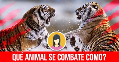 Qué Animal se combate como?