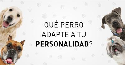 Qué perro adapte a tu personalidad?