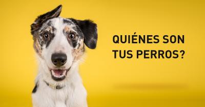 Quiénes son tus perros?