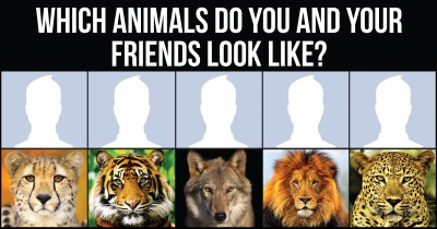Which Animals do you and your friends look like?