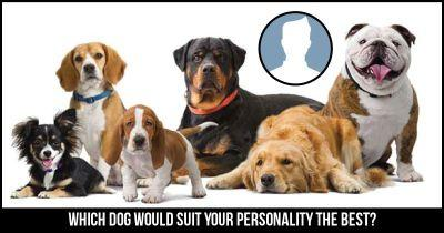 Which Dog would suit your Personality the Best?