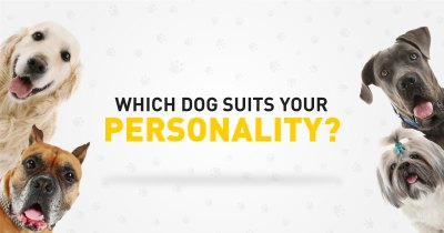 Which Dog Suits your personality?