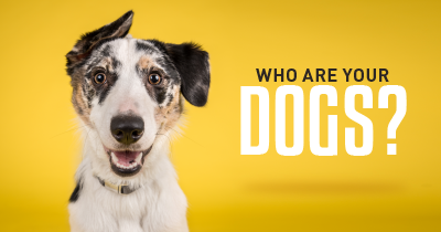 Who are your Dogs?