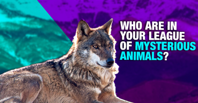 Who are in your League of Mysterious Animals?