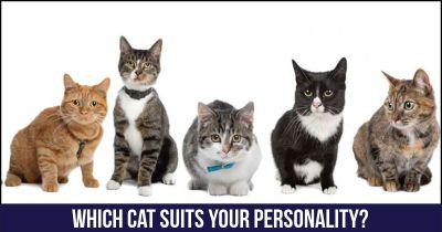 Which Cat suits your personality?