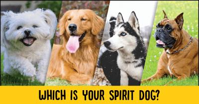 Which is your Spirit Dog?