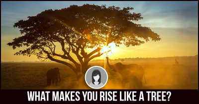 What makes you rise like a Tree?