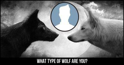 What type of Wolf are you?