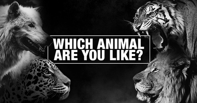 Which Animal are You like?