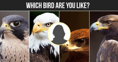 Which Bird are You like?