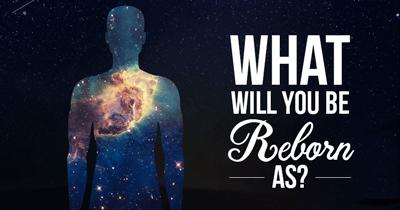 What will you be Reborn as?